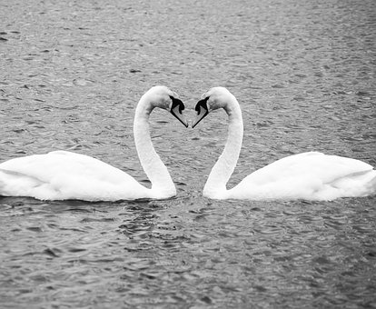 This image has an empty alt attribute; its file name is swan-heart-3346004__340.jpg