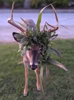 This image has an empty alt attribute; its file name is deer-with-deco-antlers.jpg