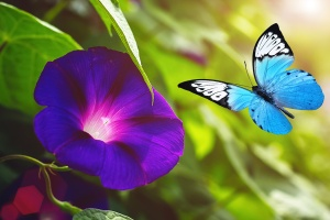 Blue Colored Morning Glory Flowers Background